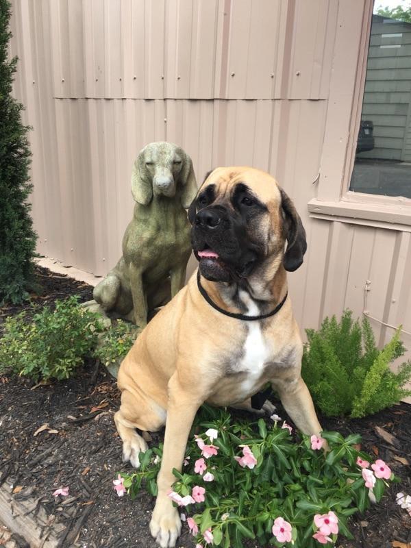 statueanddog