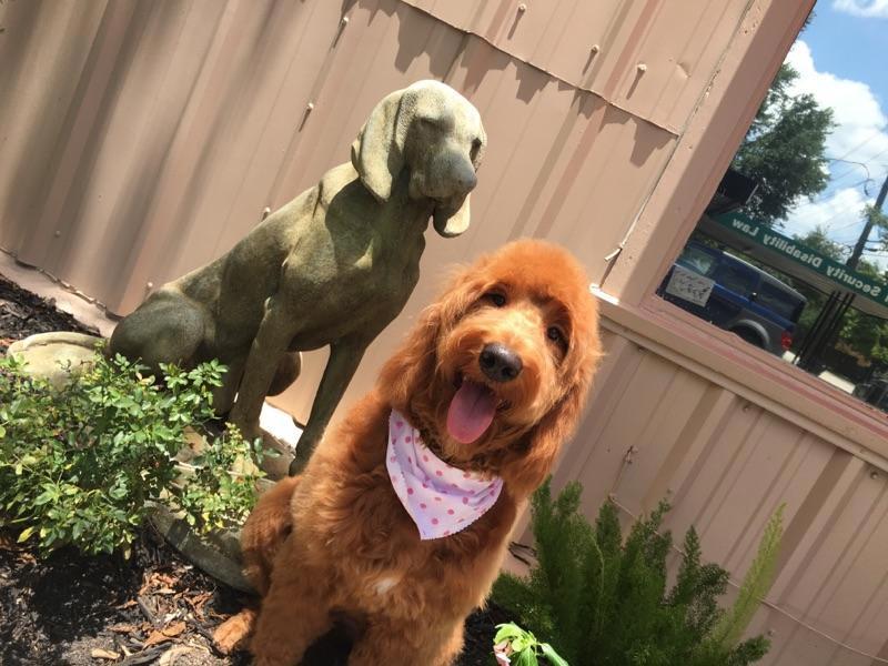 statueanddog2